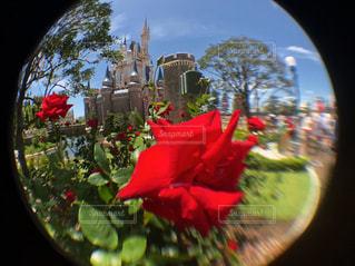赤い花のビューの写真・画像素材[1304125]