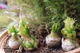 庭の植物の写真・画像素材[1073925]