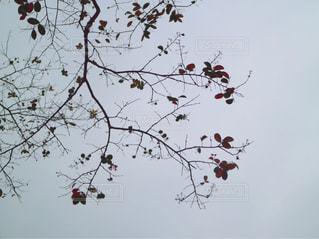 冬の支度の写真・画像素材[1074007]