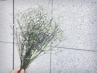 かすみ草の写真・画像素材[1227190]