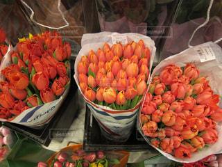 チューリップの花の写真・画像素材[1090242]