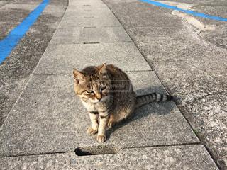 道の端に座っている猫の写真・画像素材[1074024]