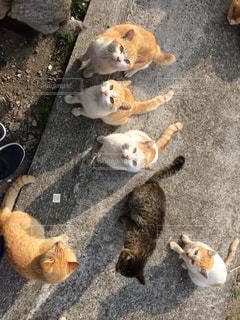 野良ネコの写真・画像素材[1074145]