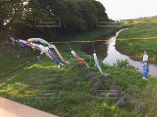 河の上を泳ぐの写真・画像素材[1156516]