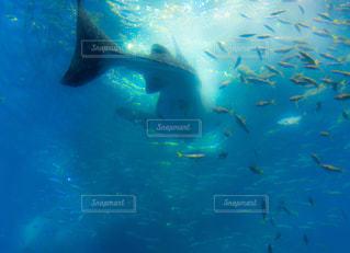 水面下を泳ぐ魚たちの写真・画像素材[1226184]