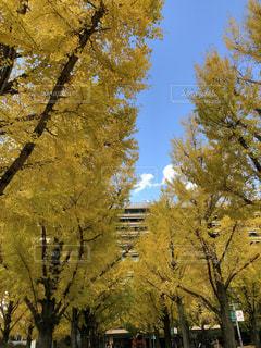 近くの木のアップの写真・画像素材[1075219]