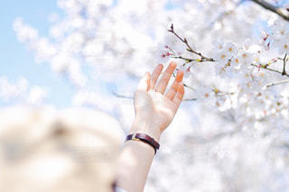 桜と手と帽子の写真・画像素材[1111406]
