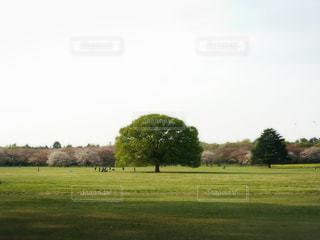 この木なんの木?の写真・画像素材[1075621]