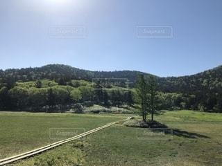 背景の木と大規模なグリーン フィールドの写真・画像素材[1610159]