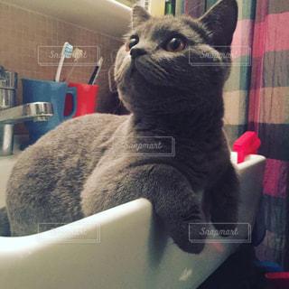 ボックスに座って猫の写真・画像素材[1075267]