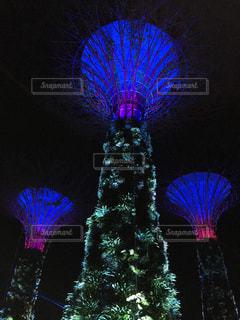シンガポールの植物園の夜景の写真・画像素材[1075399]