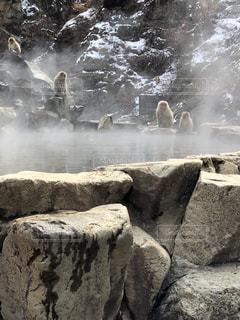 温泉に集まる猿の写真・画像素材[1075398]