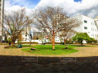 公園の木の写真・画像素材[1080810]