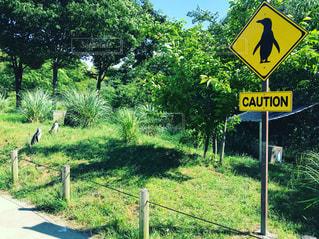 背景の木と芝生の上の記号の写真・画像素材[1244112]