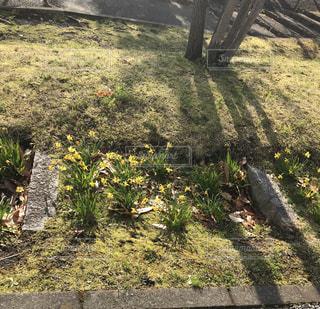 春のある日の写真・画像素材[1076153]