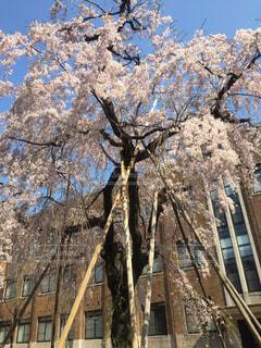 満開の春の写真・画像素材[1076201]
