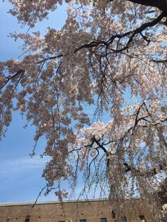 春の写真・画像素材[1076211]