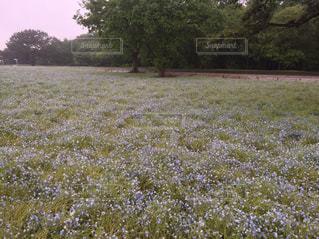 小さな青い花の写真・画像素材[1076212]