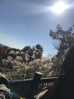 秋の光の写真・画像素材[1076214]