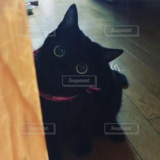 黒い猫コロちゃん - No.1076462