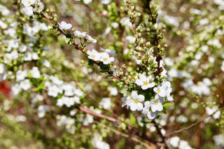 春の訪れの写真・画像素材[1076499]