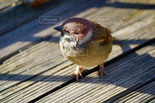 木の板の上に座って小さな鳥の写真・画像素材[1076618]