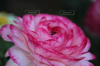 近くの花のアップの写真・画像素材[1076631]