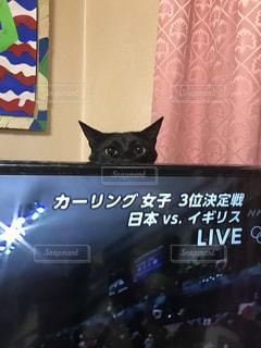 遊んで欲しいコロちゃんの写真・画像素材[1076870]
