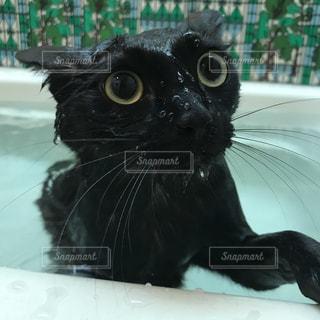 お風呂大好きの写真・画像素材[1076897]
