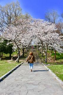 木の隣に歩道を歩いて女の写真・画像素材[1085677]