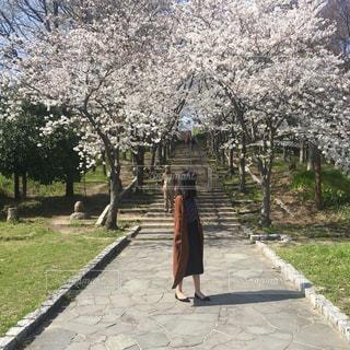 木の隣に歩道を歩いて人の写真・画像素材[1118173]