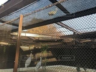 フェンスから逃げ出した鳥の写真・画像素材[1076651]
