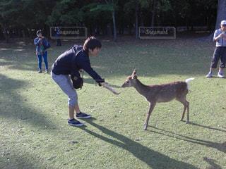 鹿に餌をあげる男 - No.1076811