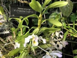 咲くやこの花館の植物の写真・画像素材[1146107]