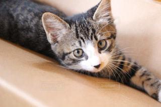 子猫の写真・画像素材[1097248]