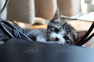 遊ぶ子猫の写真・画像素材[1097282]