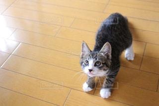 獲物を狙う子猫の写真・画像素材[1097339]
