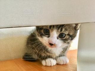 imacからのぞく子猫の写真・画像素材[1098375]