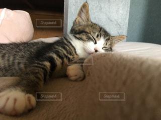 ベッドの上で横になっている猫の写真・画像素材[1098376]