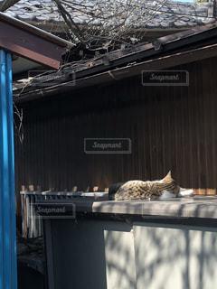 日向ぼっこしている猫の写真・画像素材[1076929]