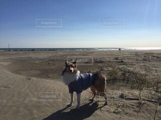 ビーチに立っている犬の写真・画像素材[1077244]