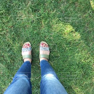 草の上に立つの写真・画像素材[2289378]