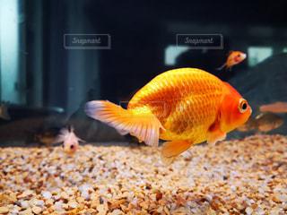 魚のクローズアップの写真・画像素材[2364861]