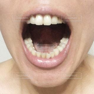歯の写真・画像素材[2475266]
