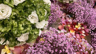 花のクローズアップの写真・画像素材[2952305]