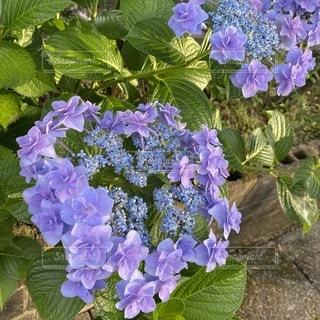 花のクローズアップの写真・画像素材[3343031]