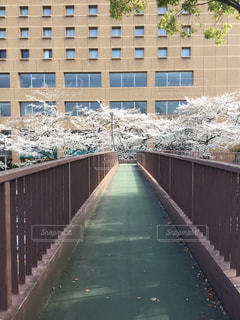 歩道橋と桜の写真・画像素材[1087232]