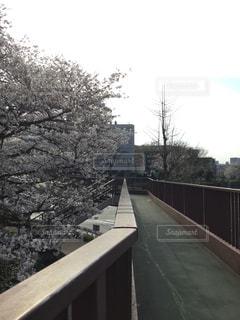 歩道橋と桜の写真・画像素材[1087235]