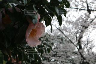 春の色の写真・画像素材[1087344]