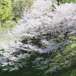 花は時に嵐のごとくの写真・画像素材[1094343]